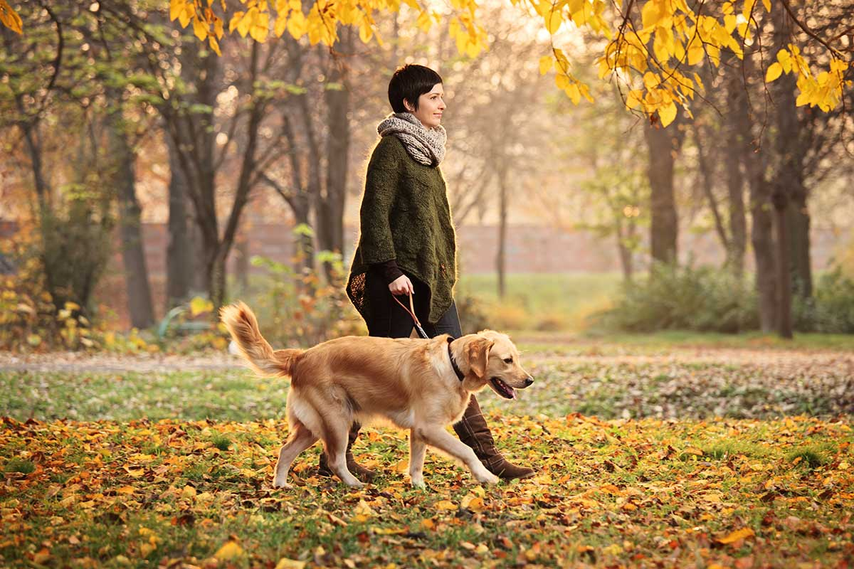 Girl And Her Dog Walking In A Park